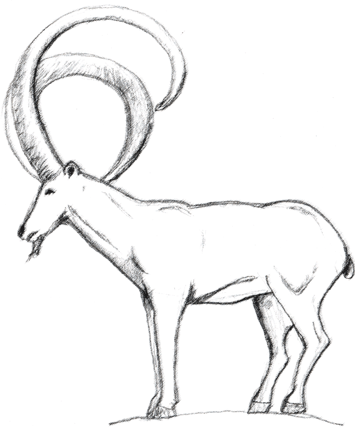 mountain goat. Photoshop*